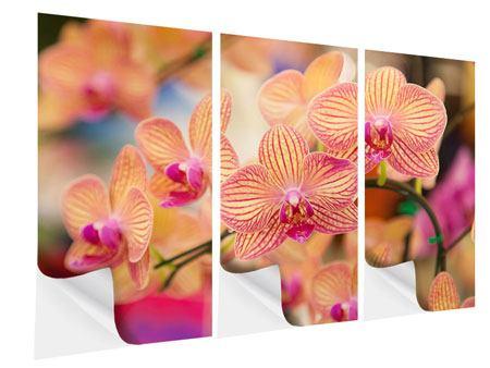 Klebeposter 3-teilig Exotische Orchideen
