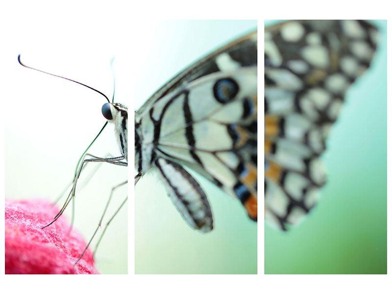 Klebeposter 3-teilig Schmetterling XXL
