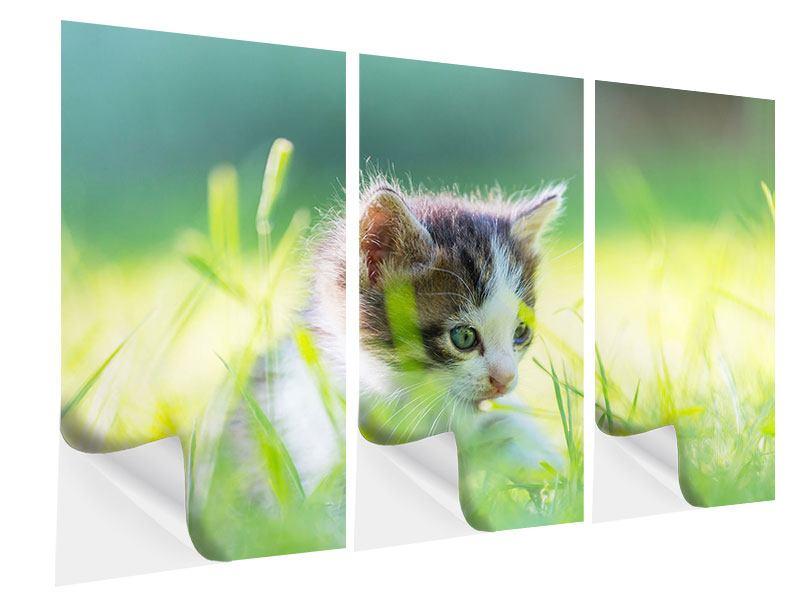 Klebeposter 3-teilig Kitten