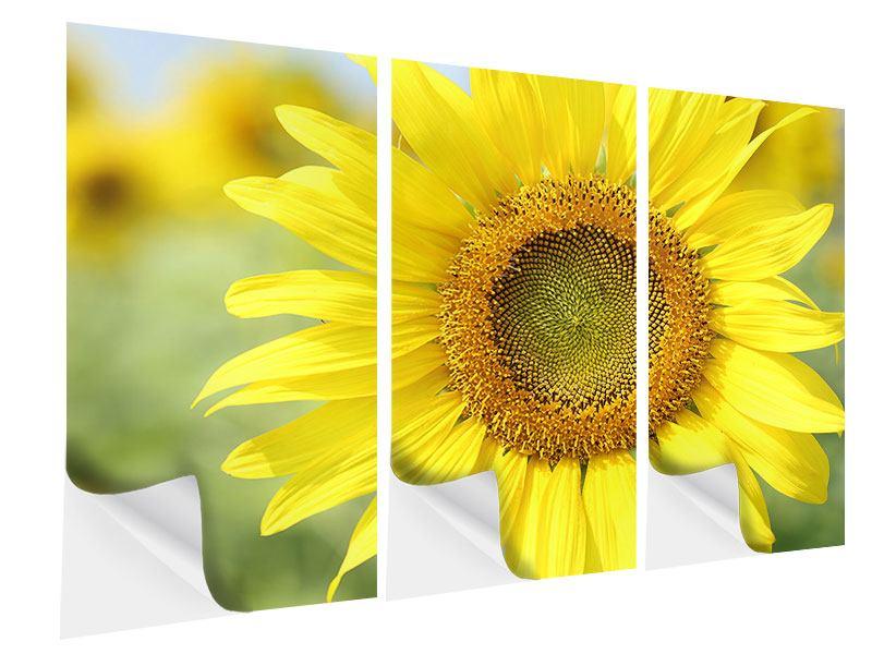 Klebeposter 3-teilig Die Blume der Sonne