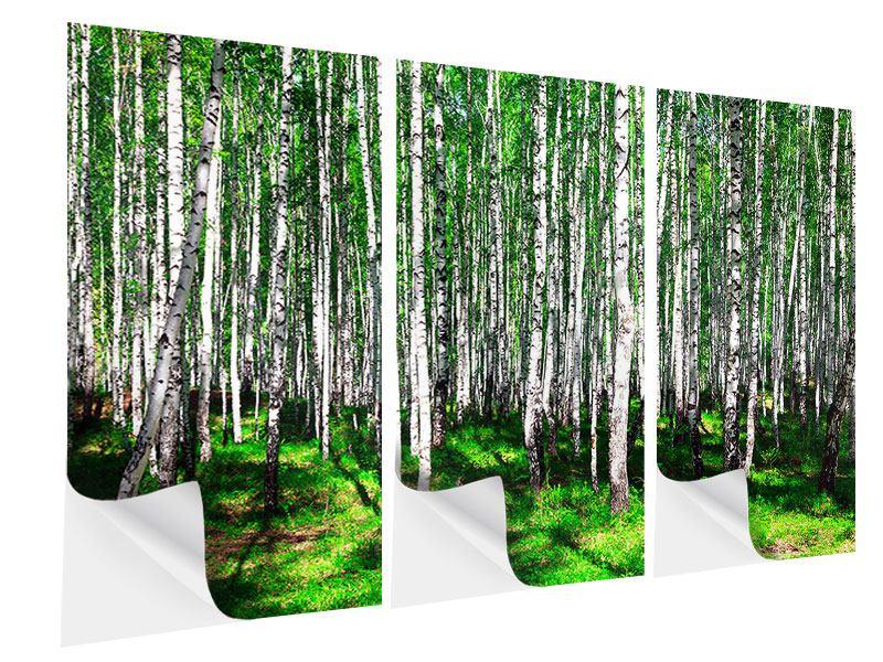 Klebeposter 3-teilig Sommerlicher Birkenwald