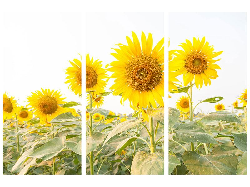 Klebeposter 3-teilig Das Sonnenblumenfeld
