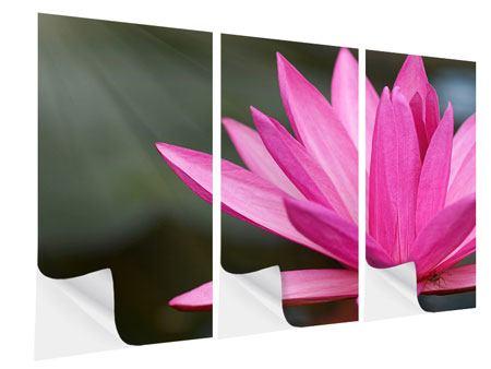 Klebeposter 3-teilig XXL Seerose in Pink