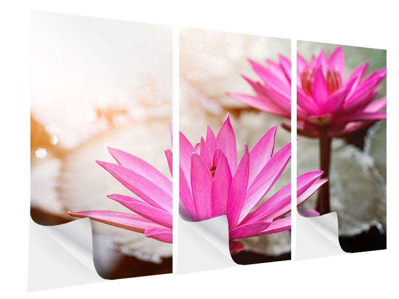 Klebeposter 3-teilig Lotus-Duo