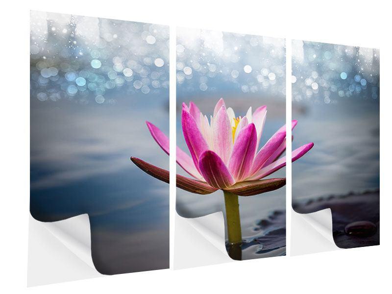 Klebeposter 3-teilig Lotus im Morgentau