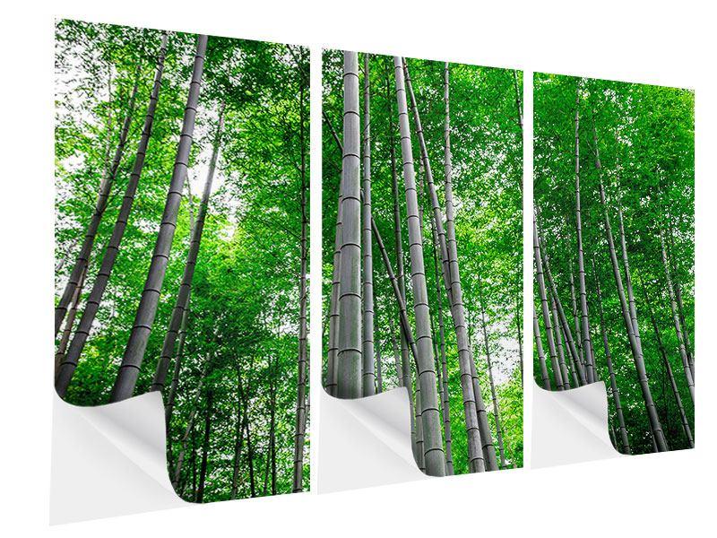 Klebeposter 3-teilig Bambuswald