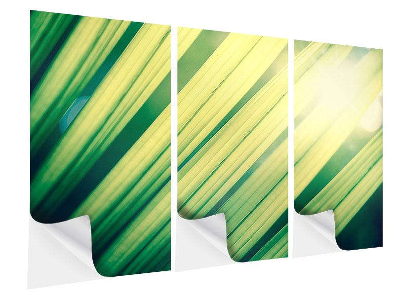 Klebeposter 3-teilig Beleuchtetes Palmblatt