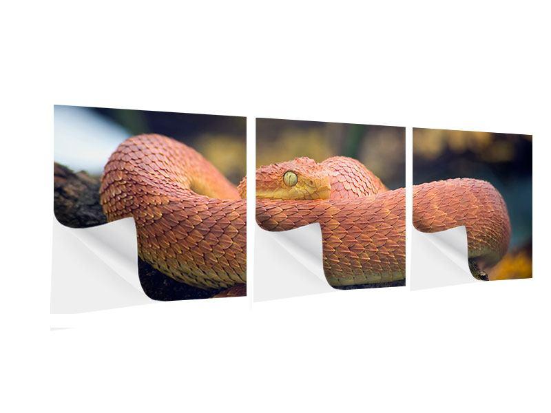 Panorama Klebeposter 3-teilig Schlange