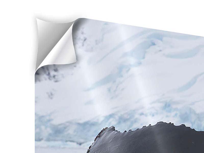 Panorama Klebeposter 3-teilig Der Buckelwal