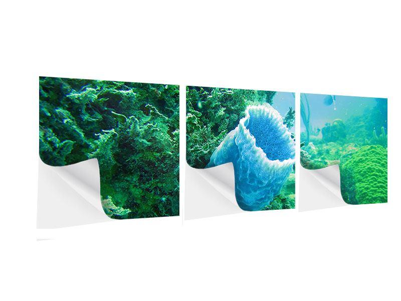 Panorama Klebeposter 3-teilig Korallen
