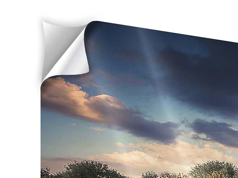Panorama Klebeposter 3-teilig Die Wiesenmargerite am Fluss