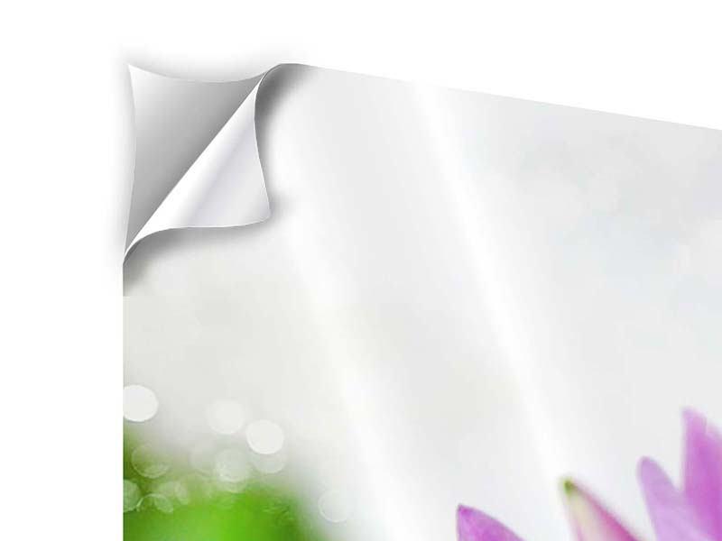 Panorama Klebeposter 3-teilig Die Lotus mit Biene