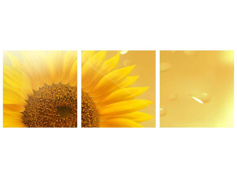 Panorama Klebeposter 3-teilig Sonnenblume im Morgentau