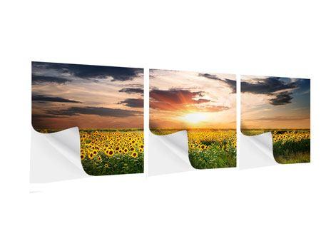 Panorama Klebeposter 3-teilig Ein Feld von Sonnenblumen