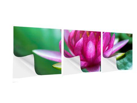 Panorama Klebeposter 3-teilig Lotus in Pink