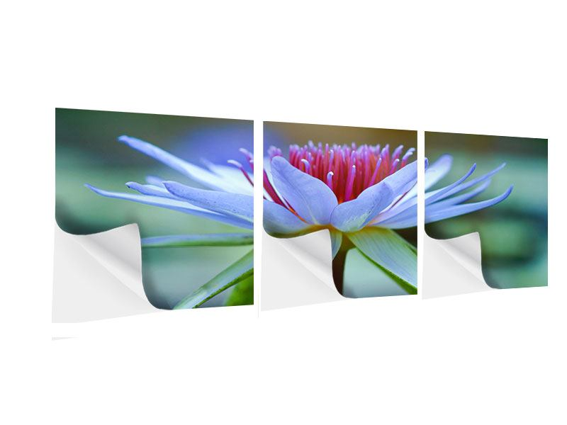 Panorama Klebeposter 3-teilig Pretty Lotus