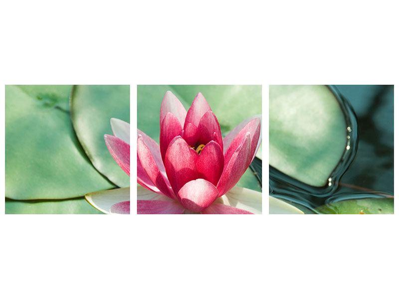 Panorama Klebeposter 3-teilig Der Frosch und das Lotusblatt
