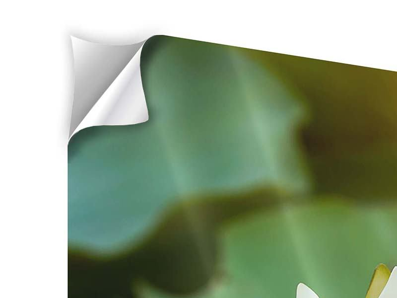 Panorama Klebeposter 3-teilig Romantische Seerose