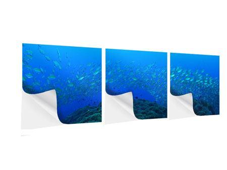 Panorama Klebeposter 3-teilig Fischschwärme