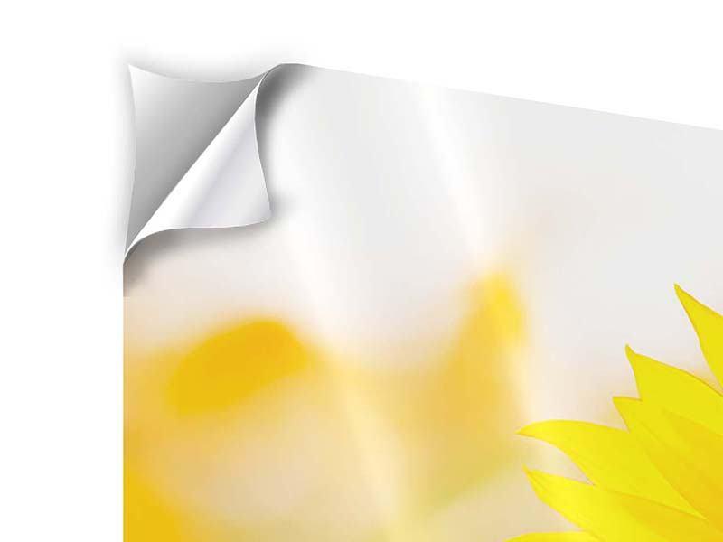 Panorama Klebeposter 3-teilig Sunflower