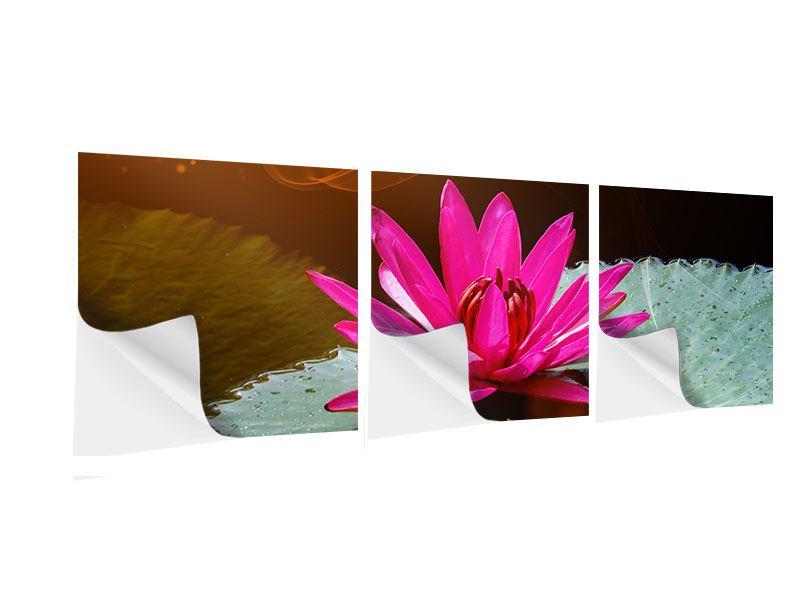 Panorama Klebeposter 3-teilig Der Frosch und das Seerosenblatt