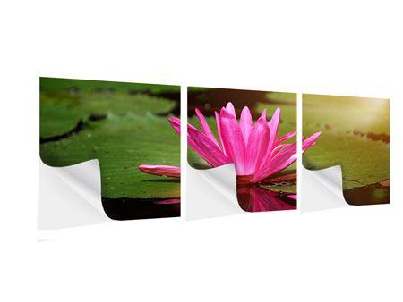 Panorama Klebeposter 3-teilig Lotus im Wasser