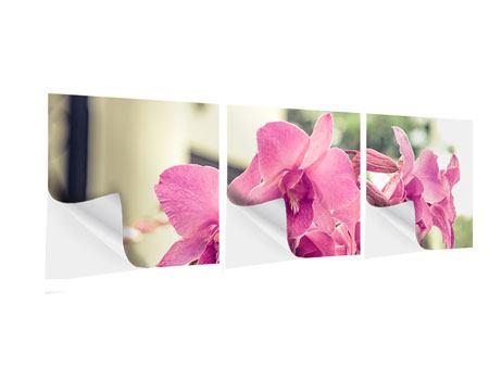 Panorama Klebeposter 3-teilig Ein Fensterplatz für die Orchideen