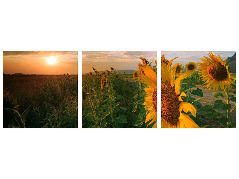 Panorama Klebeposter 3-teilig Sonnenblumen im Lichtspiel