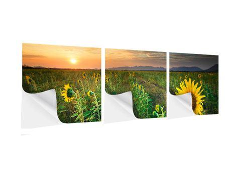 Panorama Klebeposter 3-teilig Sonnenblumenfeld im Abendrot