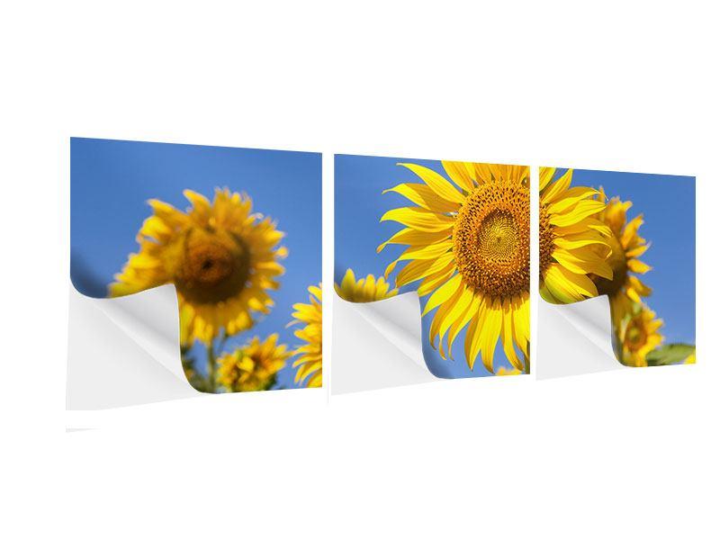 Panorama Klebeposter 3-teilig Himmlische Sonnenblumen