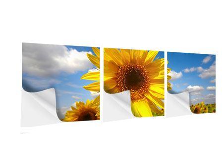 Panorama Klebeposter 3-teilig Das Feld der Sonnenblumen