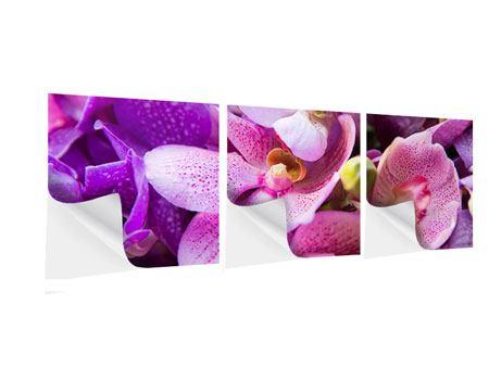 Panorama Klebeposter 3-teilig Im Orchideenparadies