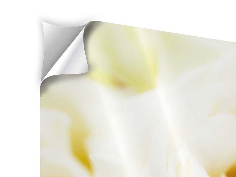 Panorama Klebeposter 3-teilig Trauringe auf Rosen gebettet