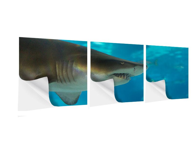 Panorama Klebeposter 3-teilig Der Haifisch