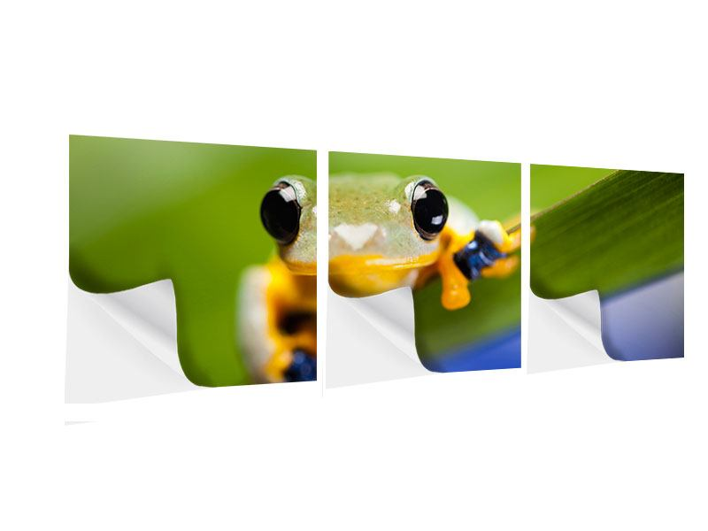 Panorama Klebeposter 3-teilig Frosch XXL