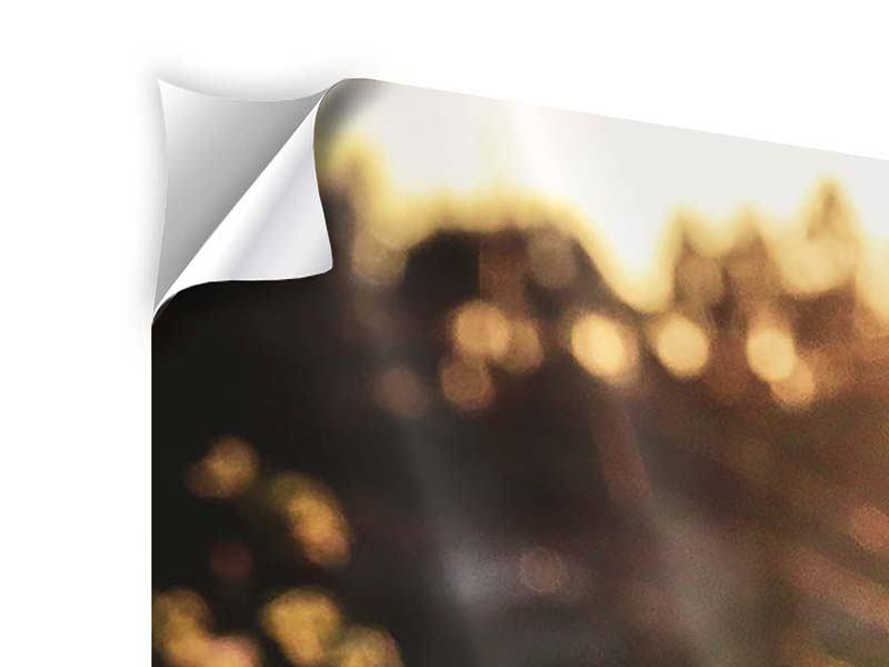 Panorama Klebeposter 3-teilig Gänseblümchen bei Sonnenuntergang