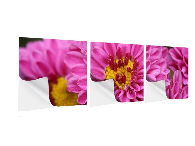 Panorama Klebeposter 3-teilig Chrysanthemen