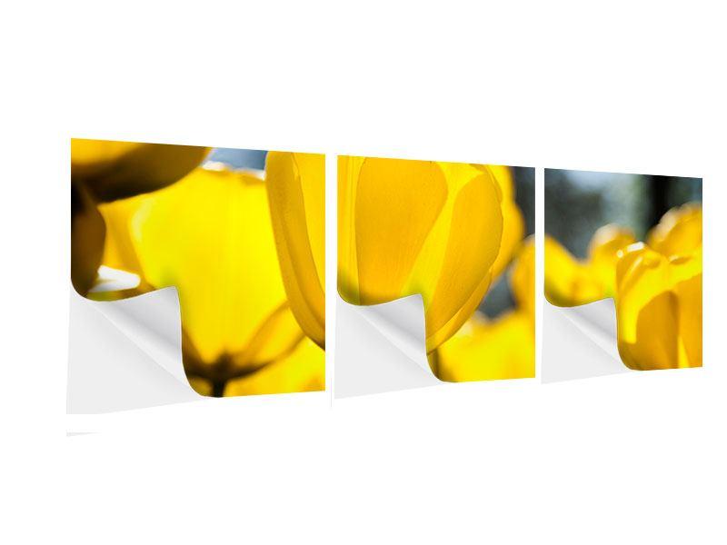 Panorama Klebeposter 3-teilig Gelbe Tulpen in XXL