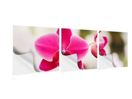 Panorama Klebeposter 3-teilig Perspektivische Orchideen