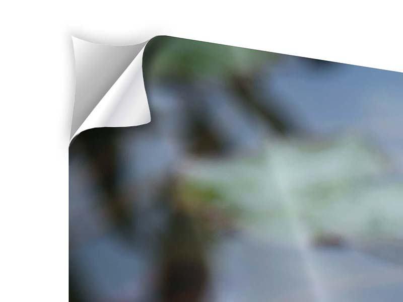 Panorama Klebeposter 3-teilig Das Seerosenduo