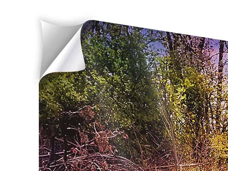 Panorama Klebeposter 3-teilig Der Waldpfad