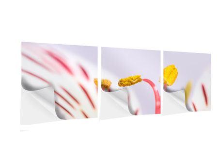 Panorama Klebeposter 3-teilig Close Up Die exotische Schönheit