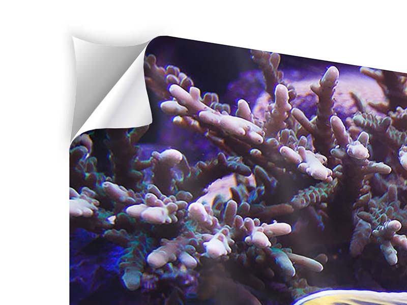 Panorama Klebeposter 3-teilig Faszination Unterwasser