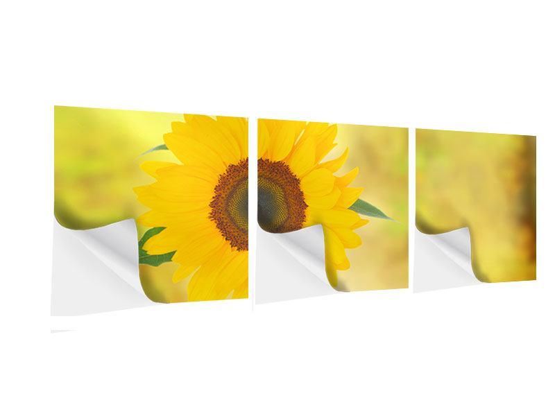 Panorama Klebeposter 3-teilig Die Sonnenblume