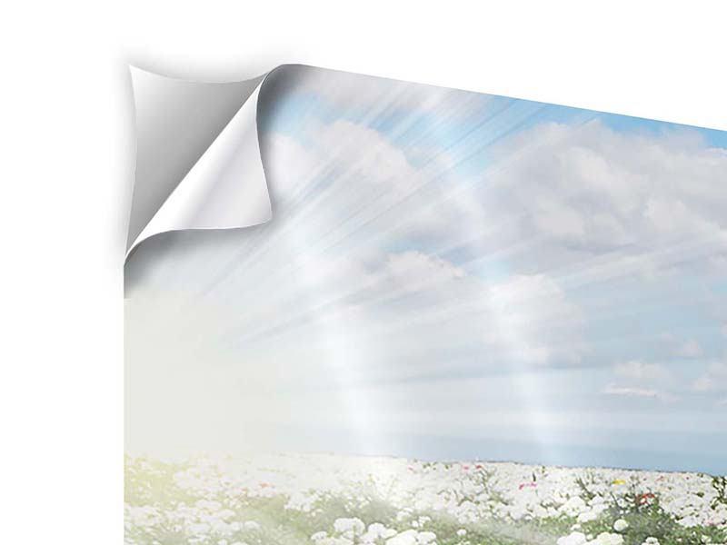 Panorama Klebeposter 3-teilig Die Frühlingsblumenwiese