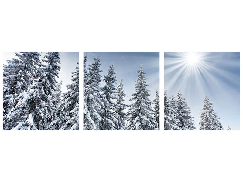 Panorama Klebeposter 3-teilig Wintertannen