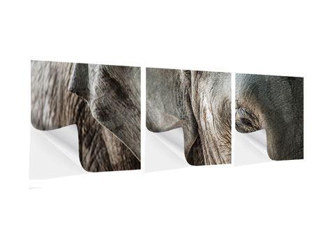 Panorama Klebeposter 3-teilig Close Up Elefant