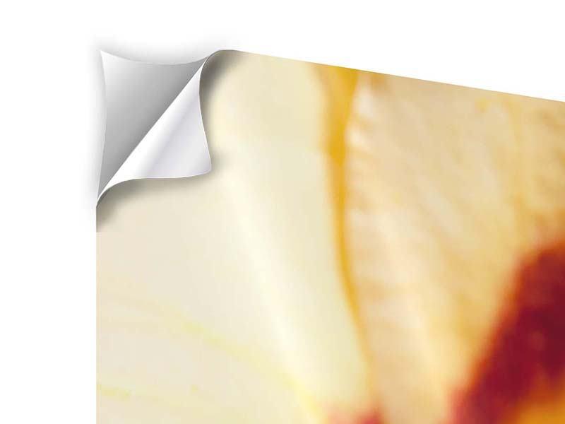 Panorama Klebeposter 3-teilig Riesenlilie