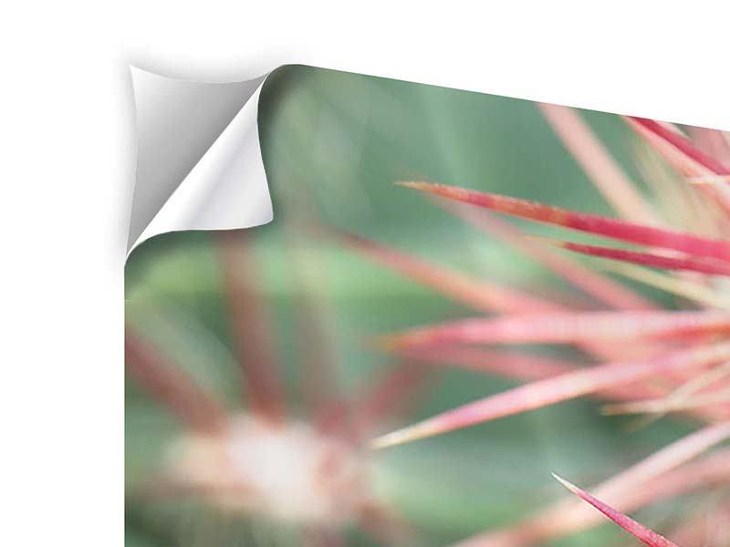 Panorama Klebeposter 3-teilig Die Kaktusblüte