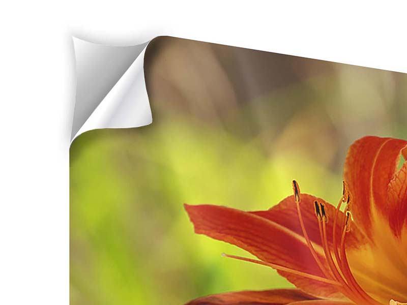 Panorama Klebeposter 3-teilig Lilien in der Natur
